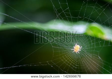Spider on the web over green background waiting For Prey