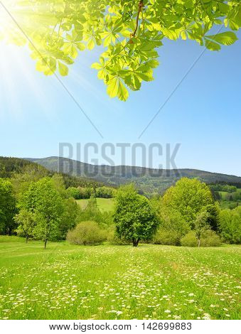 Spring mountain landscape in National park Sumava - Czech Republic