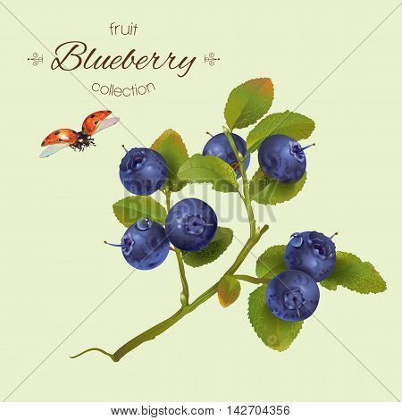 Vector realistic illustration of blueberry with leaves.Isolated on light green background.Design for grocery farmers market natural cosmetics aromatherapy,pastries and sweets filled with blueberry.