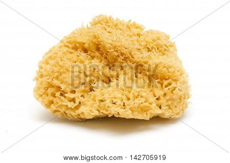 Natural Bath Sponge Isolated on White background