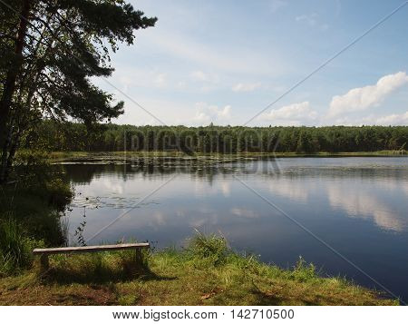 Forest lake with a wooden bench on the coast.