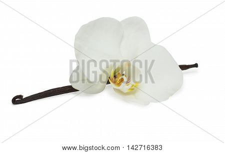Vanilla beans and with white orchid isolated