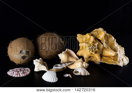 Still life: large and small clamshell clam shell with coconut on a black background