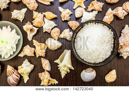 Shell background abstract spa sea salt flower frame