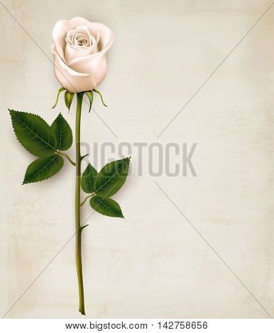 White rose on paper background. Vector.