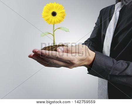 Human hands holding a 	plant