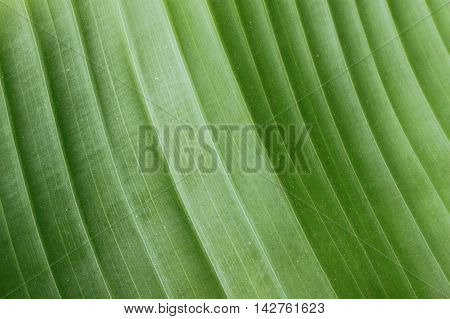 Close-up of a light green gradient on a leaf.