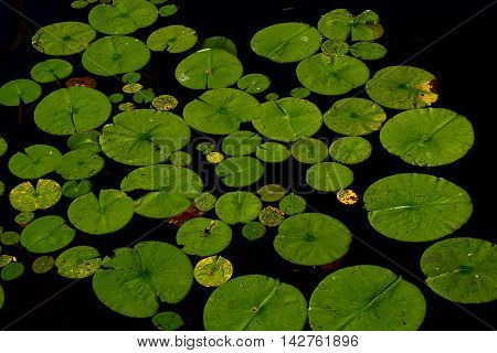 an image in detail with a lotus flower . you can see amazing details