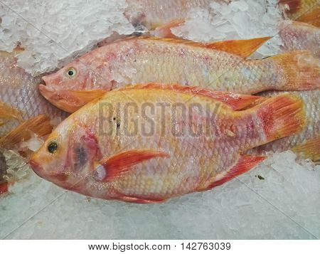 Fresh Red Tilapia fish aka Pla Tabtim on ice exposition at the seafood market. Display of the catch of the day