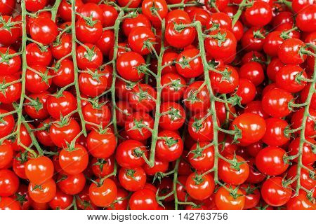 Background Picture Of Tomatoes On The Vine