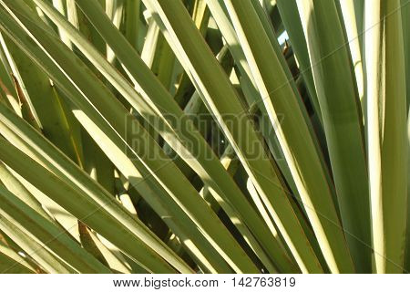 Photograph of the leaves of a green plant at dusk.