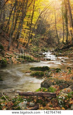 Autumn landscape. Composition of nature. River into canyon.