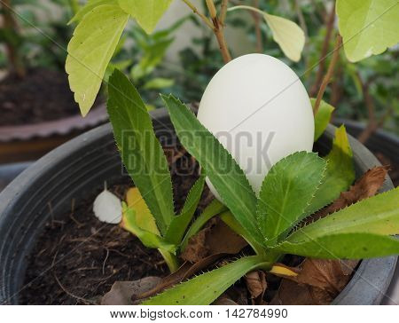 egg decoration or egg easter on the plant pot