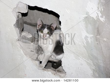 Cat In The Hole.