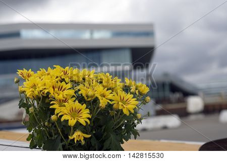AARHUS DENMARK - AUGUST 14 2016:Blurred modern architecture on Aarhus Dockland - Dokk1 has just been named the world's best public library- Yellow flowers in forground. August 14 2016