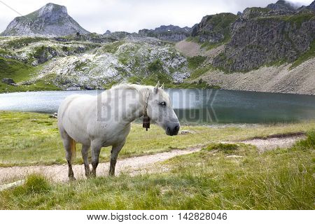 Horse In Front Of A Lake Between Mountins Grazing, In France, Pyrenees
