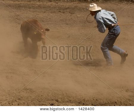Calf Roper Gets Ready For Tie