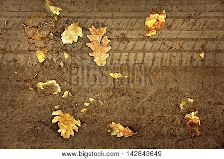 elevated view of close up yellow autumn leaf
