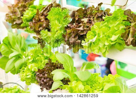 Hydroponics method of growing plants using mineral nutrient solutions in water without soil.