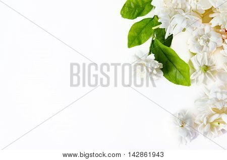 Flower Background Of Jasmine Flowers Spread On White Background