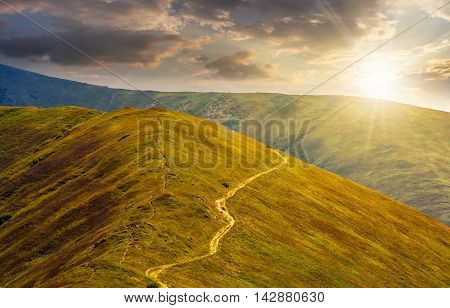 winding road through large meadows on the hillside of Polonina mountain range in evening light