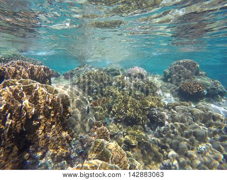 Coral reef of tropical sea during low tide: coral close to water surface. Underwater landscape with coral diverse in turquoise water. Real ocean world. Snorkeling near Apo Island Philippines.