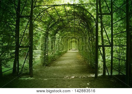 The green romantic arch in the park
