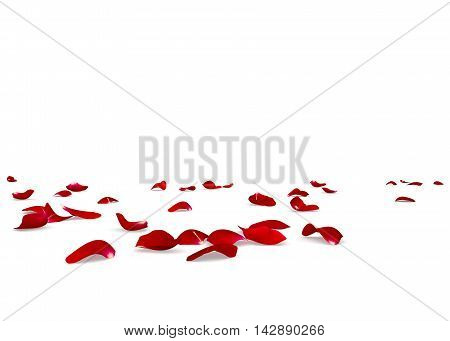 Red Rose Petals Scattered On The Floor