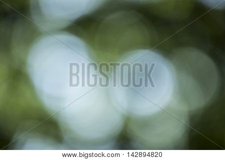 Bokeh Background In Forrest