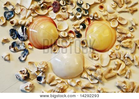 Seashells And  Sea Stones Texture
