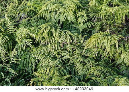 close up of green fern fronds background