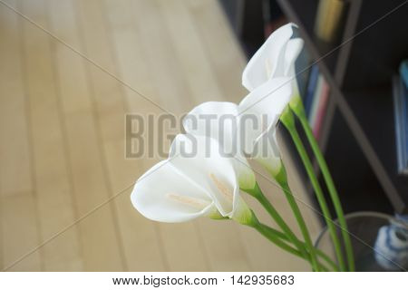 Flower of the calla