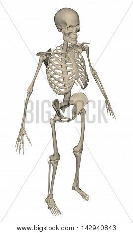 Vector illustration of realistic skeletons. Polygonal structure. 3D.