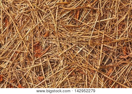 The texture of dry grass on the ground. Stem dry grass.