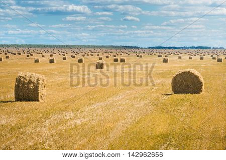 Beautiful landscape with straw bales in end of summer. Field with lots of hay bales. Summer day