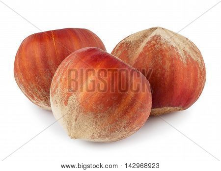 Nuts filberts isolated on white background. Three whole hazelnuts isolated on white background closeup macro. Hazelnuts