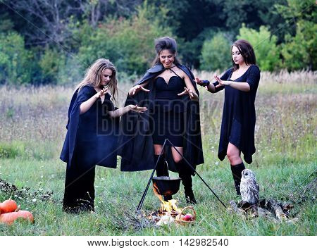 three witches conjure with potion, in the forest