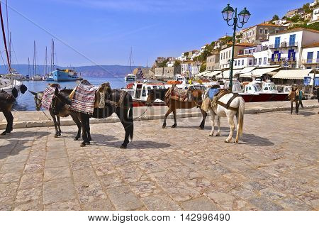donkeys the means of transport at Hydra island Saronic Gulf Greece poster