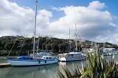 Boats moored at Whangarei town basin in the marina - Northland New Zealand NZ. poster