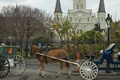 Mule drawn buggies and the St. Louis Cathedral in Jackson Square in the French Quarter. poster