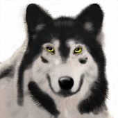 digtal wolf painting poster