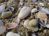 sea shells in many colors on the sand. poster