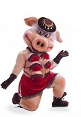 Pig mascot costume dance striptease in hat poster