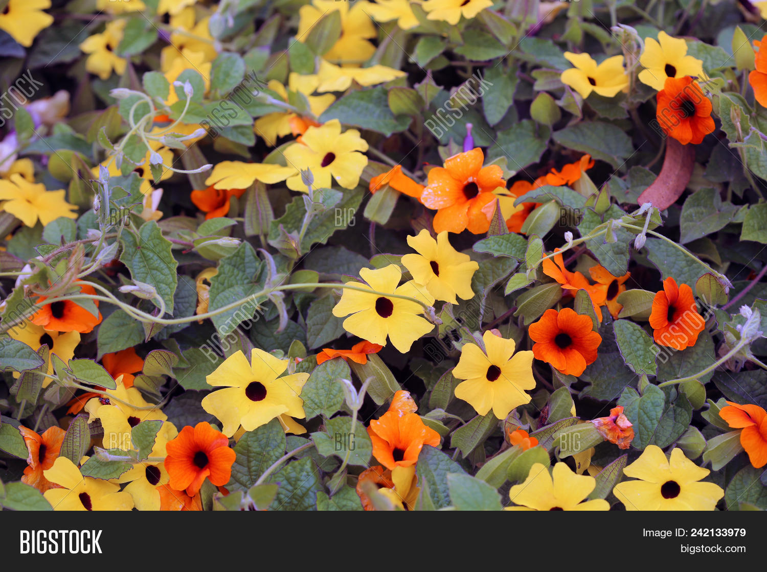 Pretty Orange Yellow Image Photo Free Trial Bigstock