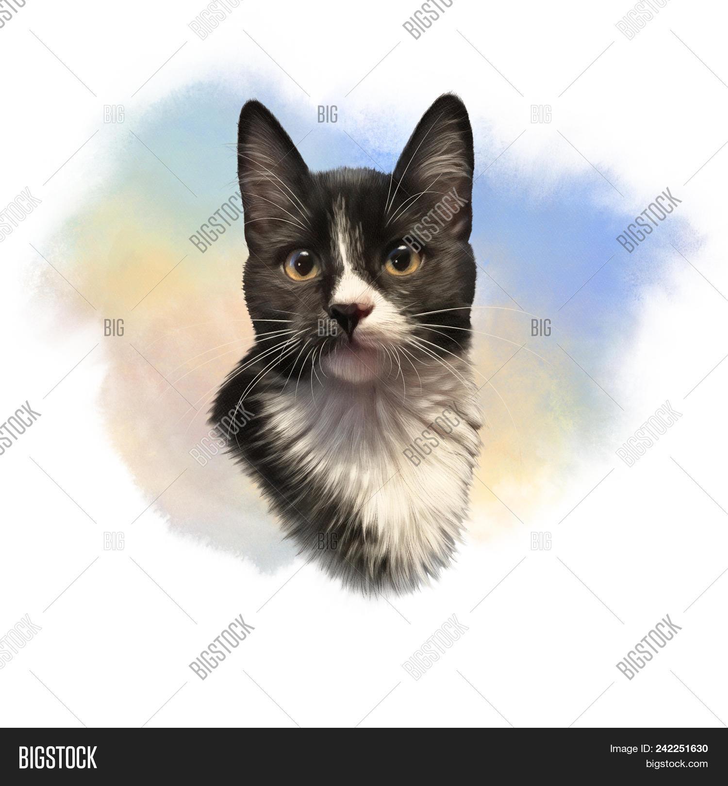 Cute Black White Cat Image Photo Free Trial Bigstock