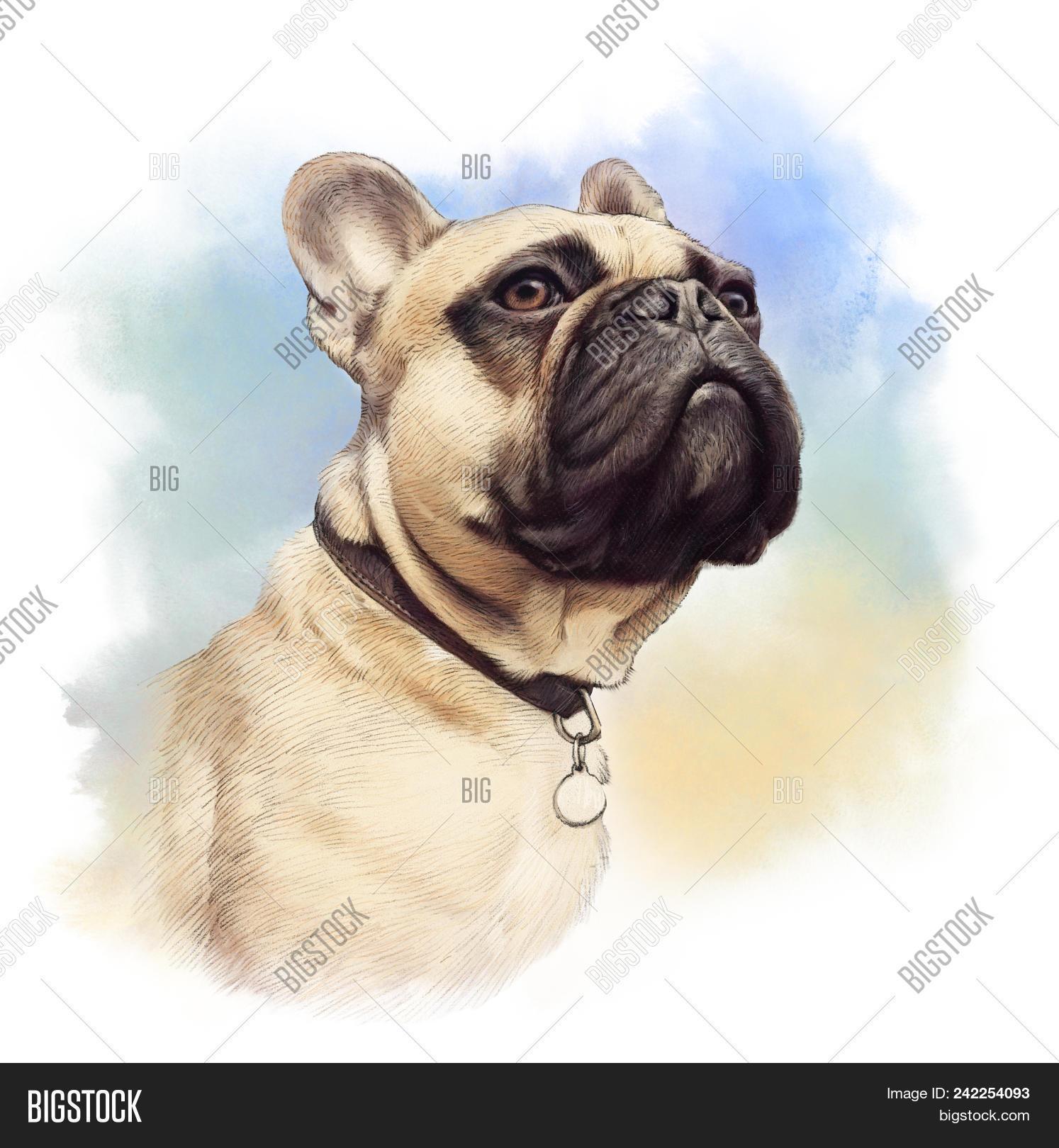 Cute French Bulldog Image Photo Free Trial Bigstock