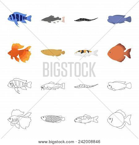 Discus, Gold, Carp, Koi, Scleropages, Fotmosus.fish Set Collection Icons In Cartoon, Outline Style V