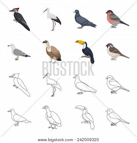 Gull, Toucan And Other Species. Birds Set Collection Icons In Cartoon, Outline Style Vector Symbol S