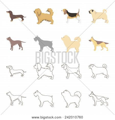 Pit Bull, German Shepherd, Chow Chow, Schnauzer. Dog Breeds Set Collection Icons In Cartoon, Outline