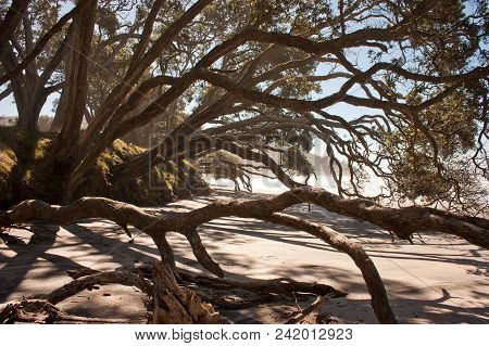 In The Shade Of Trees In Orokawa Reserve, New Zealand, Evening On The Beach, Natural Environment